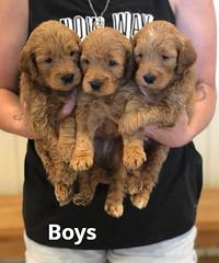 Bailey Boys pic 3 7-16