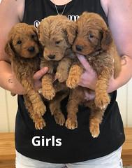 Bailey Girls 7-16