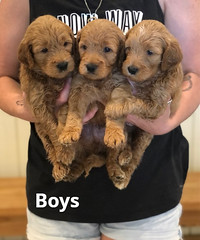Bailey Boys pic 4 7-16