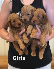 Bailey Girls pic 2 7-16