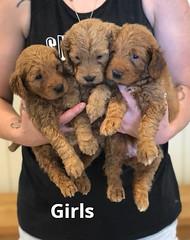 Bailey Girls pic 4 7-16