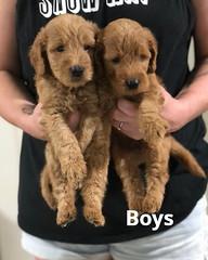 Carly Boys pic 4 7-16