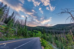 July 17, 2021 - Greenery on Trail Ridge Road. (Jessica Fey)