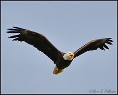 July 12, 2021 - Freedom's flight. (Bill Hutchinson)