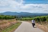 Vignobles d'Alsace