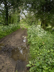 slightly muddy walk