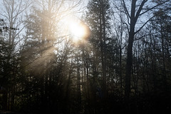Sunlight at the Nuttall Parking in New River Gorge National Park & Preserve