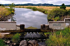 Amazon Creek