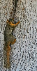 July 20, 2021 - A very wary squirrel. (LE Worley)