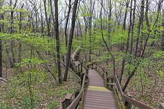 Boardwalk Trails Amongst the Forest of Indiana Dunes National Park