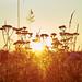 Sonnenaufgang auf der Geishöhe