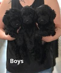 Ella Boys pic 3 7-23