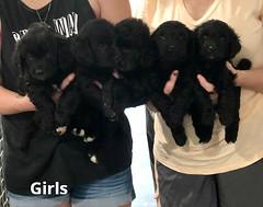 Ella Girls pic 2 7-23