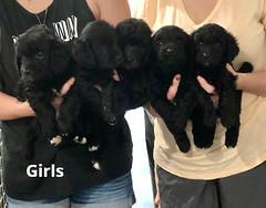 Ella Girls pic 3 7-23