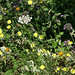 Voie_verte_fleurs