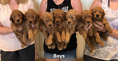 Bailey Boys pic 4 7-23