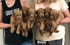 Gracie Boys pic 3 7-23