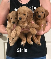 Gracie Girls 7-23