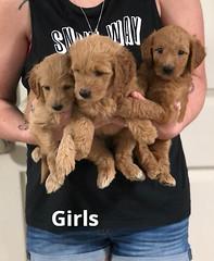 Gracie Girls pic 4 7-23