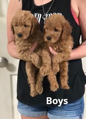 Carly Boys pic 2 7-23