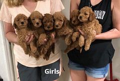 Carly Girls pic 2 7-23
