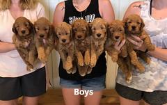 Bailey Boys 7-23