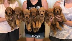 Bailey Boys pic 2 7-23