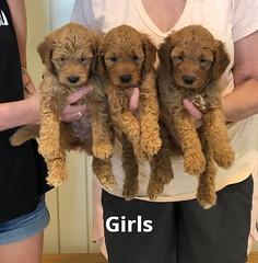 Bailey Girls 7-23