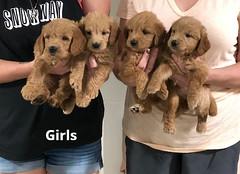 Ariel Girls pic 4 7-23