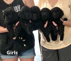 Ella Girls 7-23