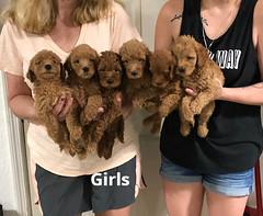 Carly Girls pic 3 7-23