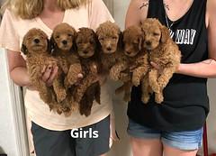 Carly Girls pic 4 7-23
