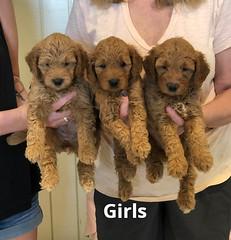 Bailey Girls pic 2 7-23