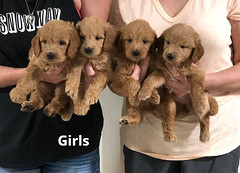 Ariel Girls 7-23