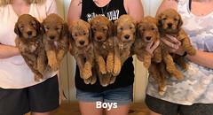 Bailey Boys pic 3 7-23