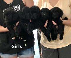 Ella Girls pic 4 7-23