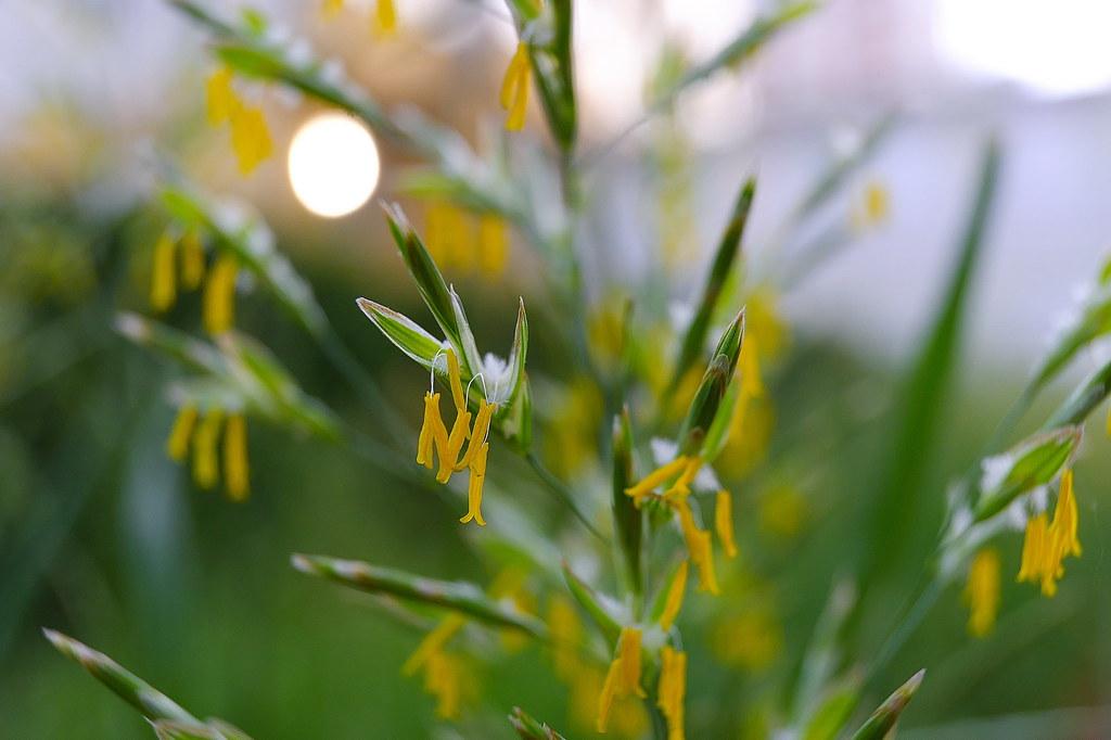 фото: Трава на закате