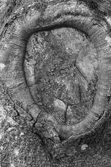 Photo of Cut off tree limb Alyth Den Perthshire Scotland