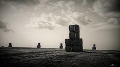 2021-07-24 17.51.28 - Moaie, Uge 29, Ebeltoftvej, Assentoft, Randers - _DSC5521-4 - ©Anders Gisle Larsson