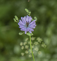 Photo of Still life flower and Insect Alyth Den