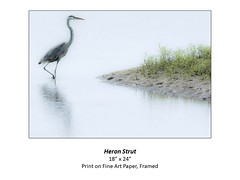 """Heron Strut • <a style=""""font-size:0.8em;"""" href=""""http://www.flickr.com/photos/124378531@N04/51335742762/"""" target=""""_blank"""">View on Flickr</a>"""