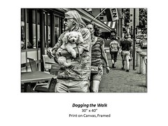 """Dogging the Walk • <a style=""""font-size:0.8em;"""" href=""""http://www.flickr.com/photos/124378531@N04/51336469581/"""" target=""""_blank"""">View on Flickr</a>"""