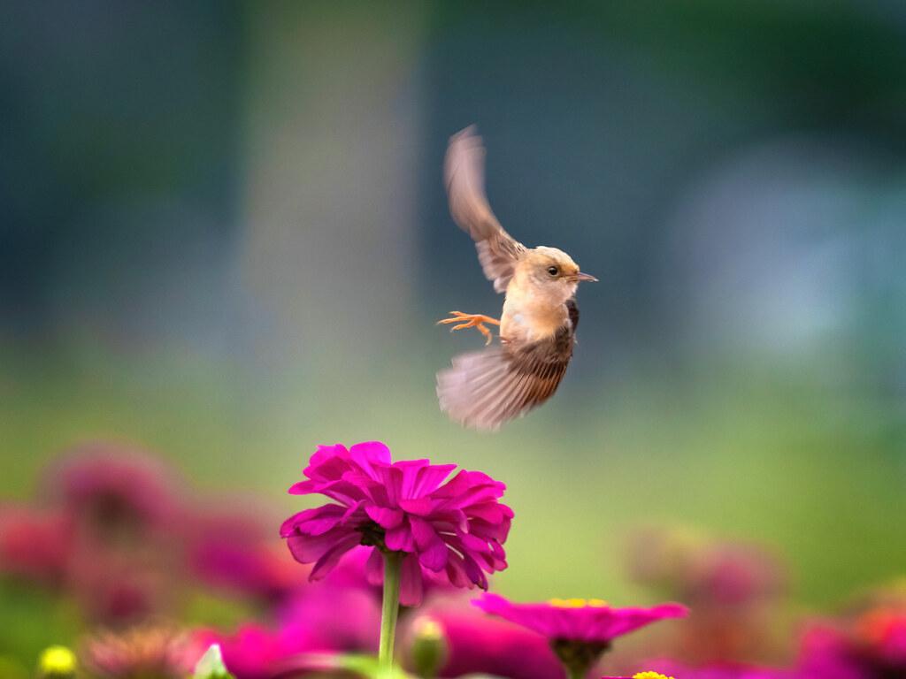 04_2020 OLYMPUS全國攝影大賽「生態保育組」金獎作品〈飛旋英姿〉康正為