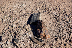 Petrified Wood Fragments Observed While Walking the Onyx Bridge Trail (Petrified Forest National Park)