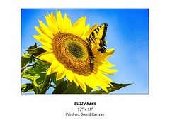 """Buzzy Bees • <a style=""""font-size:0.8em;"""" href=""""http://www.flickr.com/photos/124378531@N04/51341002673/"""" target=""""_blank"""">View on Flickr</a>"""