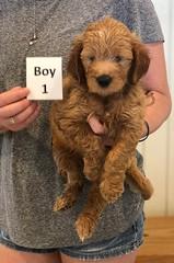 Bailey Boy 1 pic 3 7-30