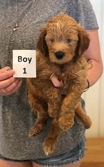 Bailey Boy 1 pic 4 7-30
