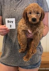 Bailey Boy 2 pic 4 7-30