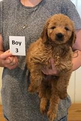 Bailey Boy 3 7-30