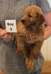 Bailey Boy 3 pic 3 7-30